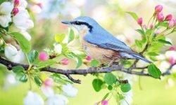Drømmetydning fugle: Drømmesymboler, Drømmer