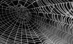 Drømmetydning edderkopper: Drømmesymboler, Drømmer