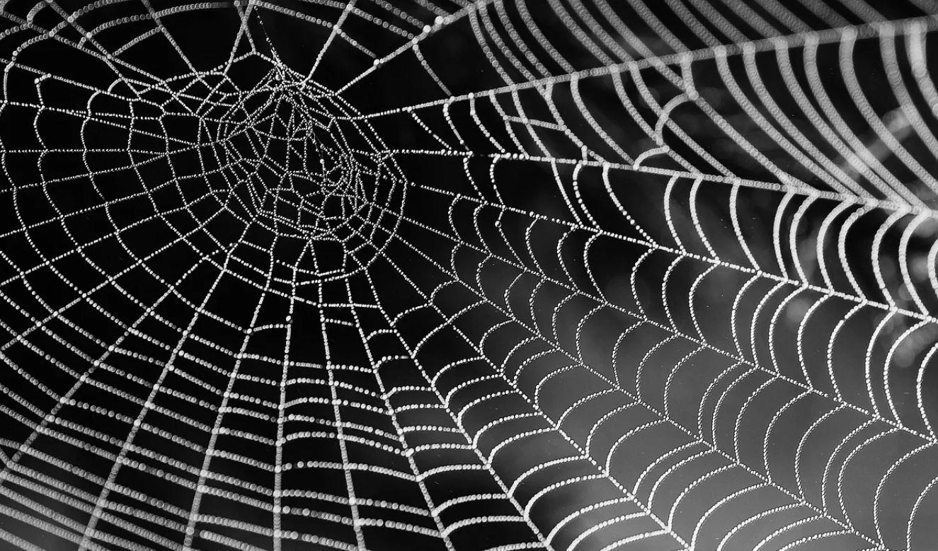 Drømmetydning edderkopper