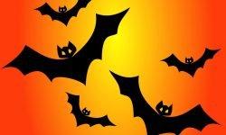 Drømmetydning flaggermus: Drømmesymboler, Drømmer