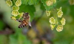 Drømmetydning bier: Drømmesymboler, Drømmer