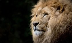 Drømmetydning dyr: Drømmesymboler, Drømmer