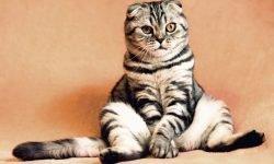 Drømmetydning katt: Drømmesymboler, Drømmer