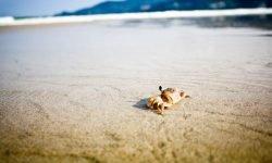 Drømmetydning krabbe: Drømmesymboler, Drømmer