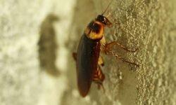 Drømmetydning kakerlakk: Drømmesymboler, Drømmer