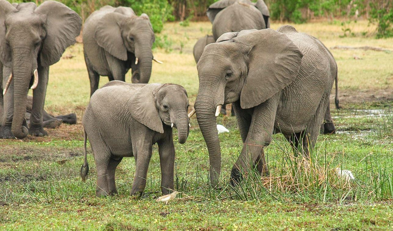 Drømmetydning elefant
