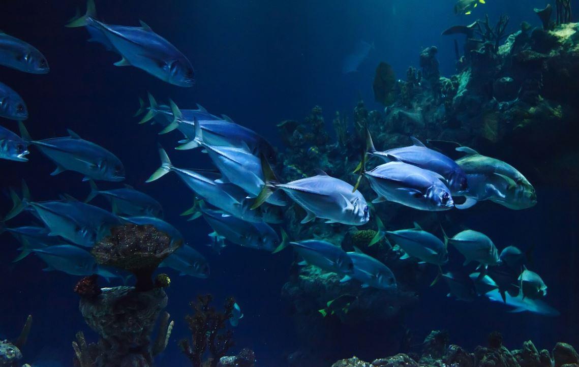 Drømmetydning fisk