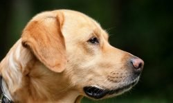 Drømmetydning hund: Drømmesymboler, Drømmer