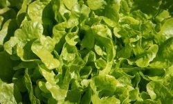 Er salat sunt? 16 gode grunner