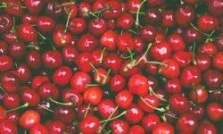 Er kirsebær sunt? 18 gode grunner